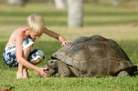Giant Tortoises in the Seychelles
