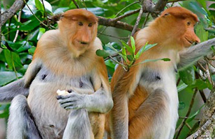 Sabah Wildlife holiday and itinerary details