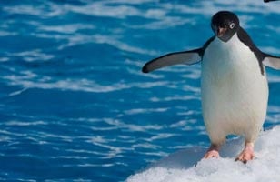 Classic Antarctica holiday and itinerary details