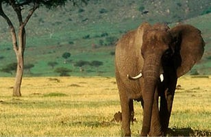 Kenya Conservation Safari holiday and itinerary details