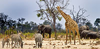 Zimbabwe Conservation Safari