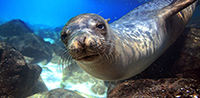 Save up to £1,020 per person: Ecuador & the Galapagos