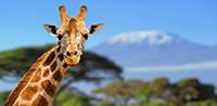 Save up to £4,880 per couple: Kenya & Zanzibar