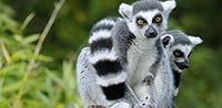 Durrell Wildlife Expedition Madagascar, Aldabra & the outer Seychelles