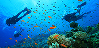 Diving & Snorkelling holiday and itinerary details