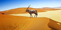 Self-Drive - Best of Namibia