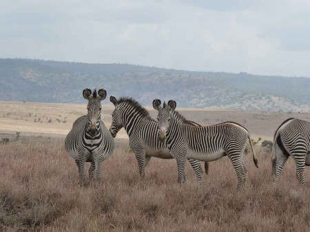 Kenya_2012_Tania_Zebras