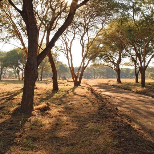 Jongomero, Ruaha National Park