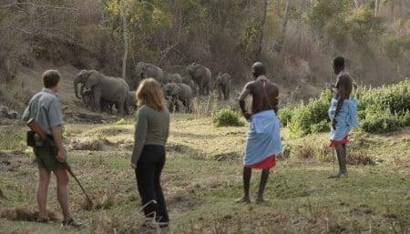 Kitich Camp - Forest Walk - Elephants