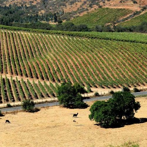 La Casona, Matetic Vineyards, Rosario Valley