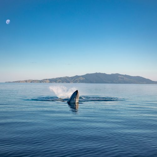 New Zealand Wildlife & Wilderness Drive