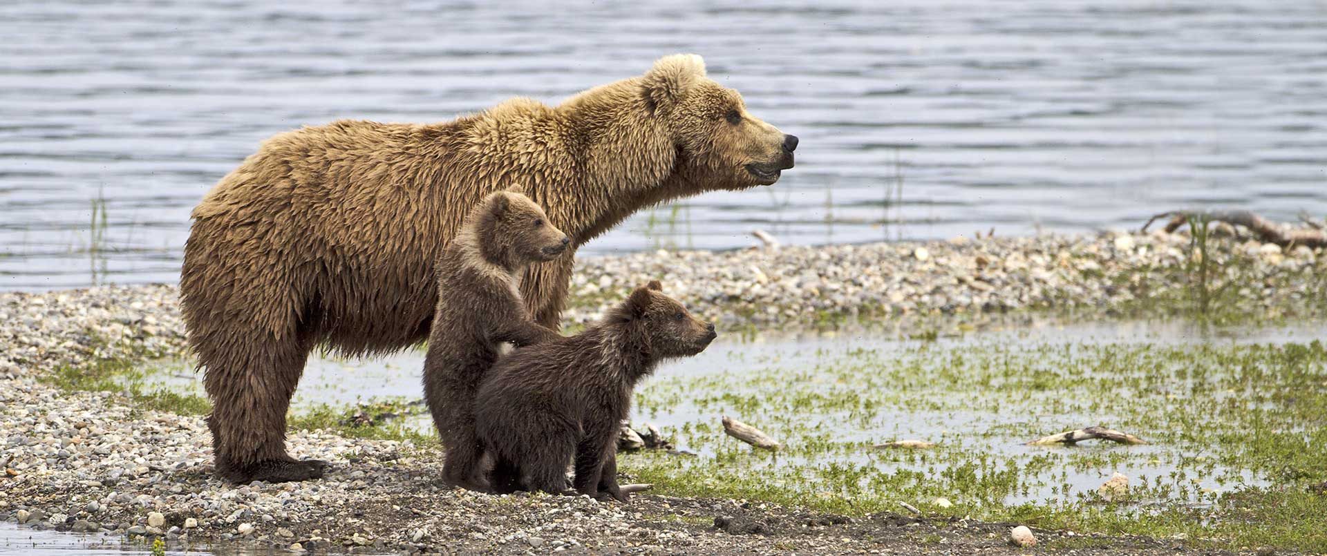 City and Bears