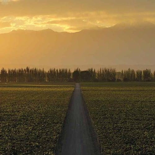 Finca Adalgisa, Mendoza
