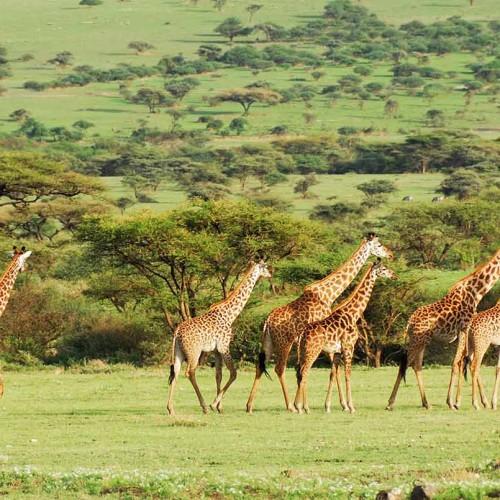 Plantation Lodge, Ngorongoro