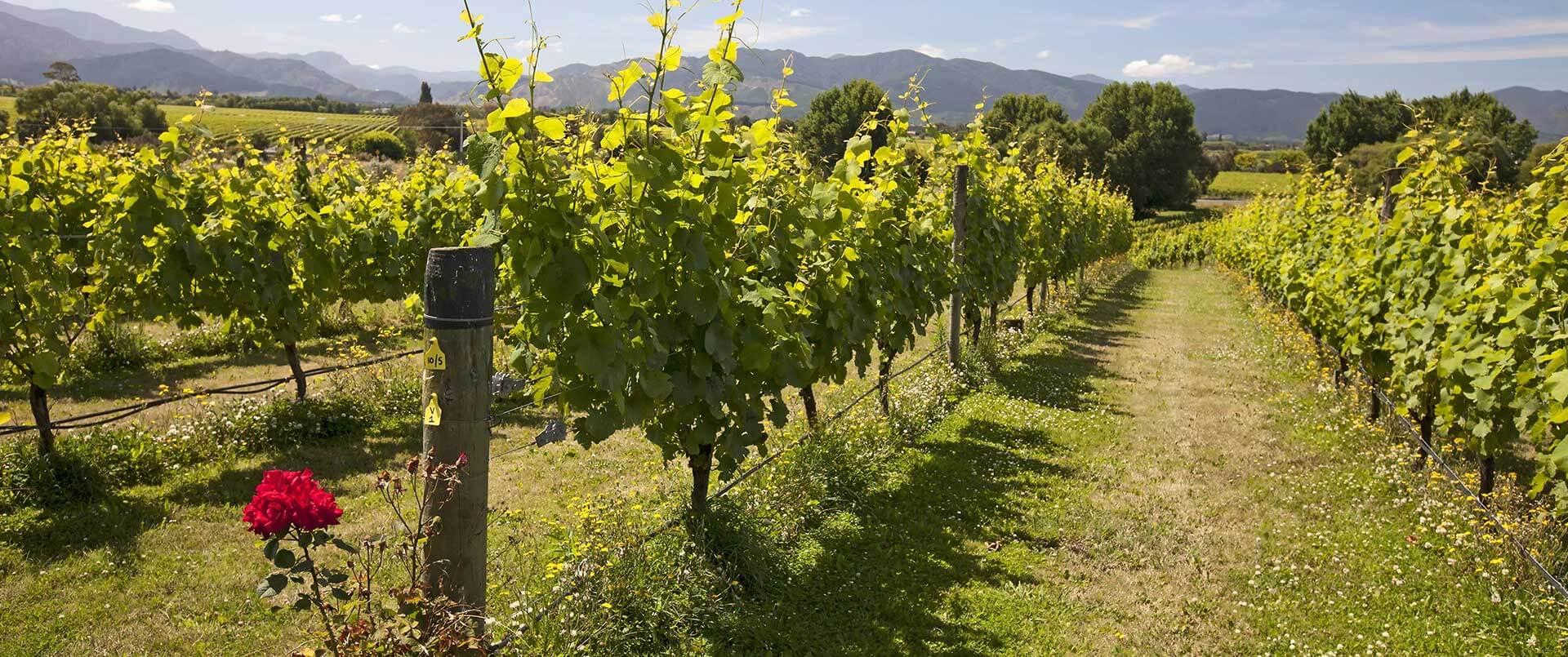 19 Day New Zealand Food & Wine Odyssey