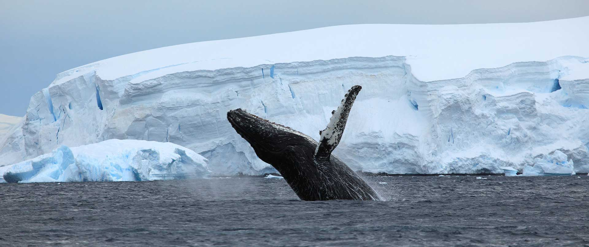 Antarctic Circle Fly Cruise
