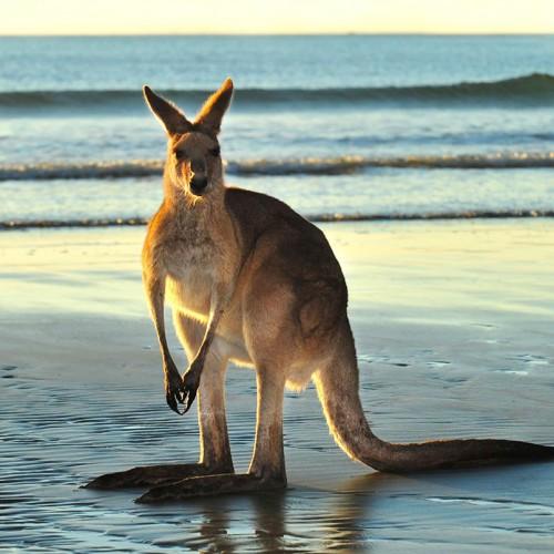 2 Day Kangaroo Island In Style