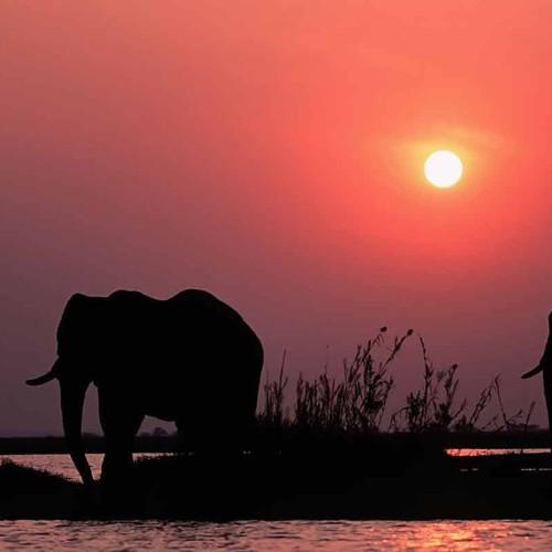 Zimbabwe Conservation Safari