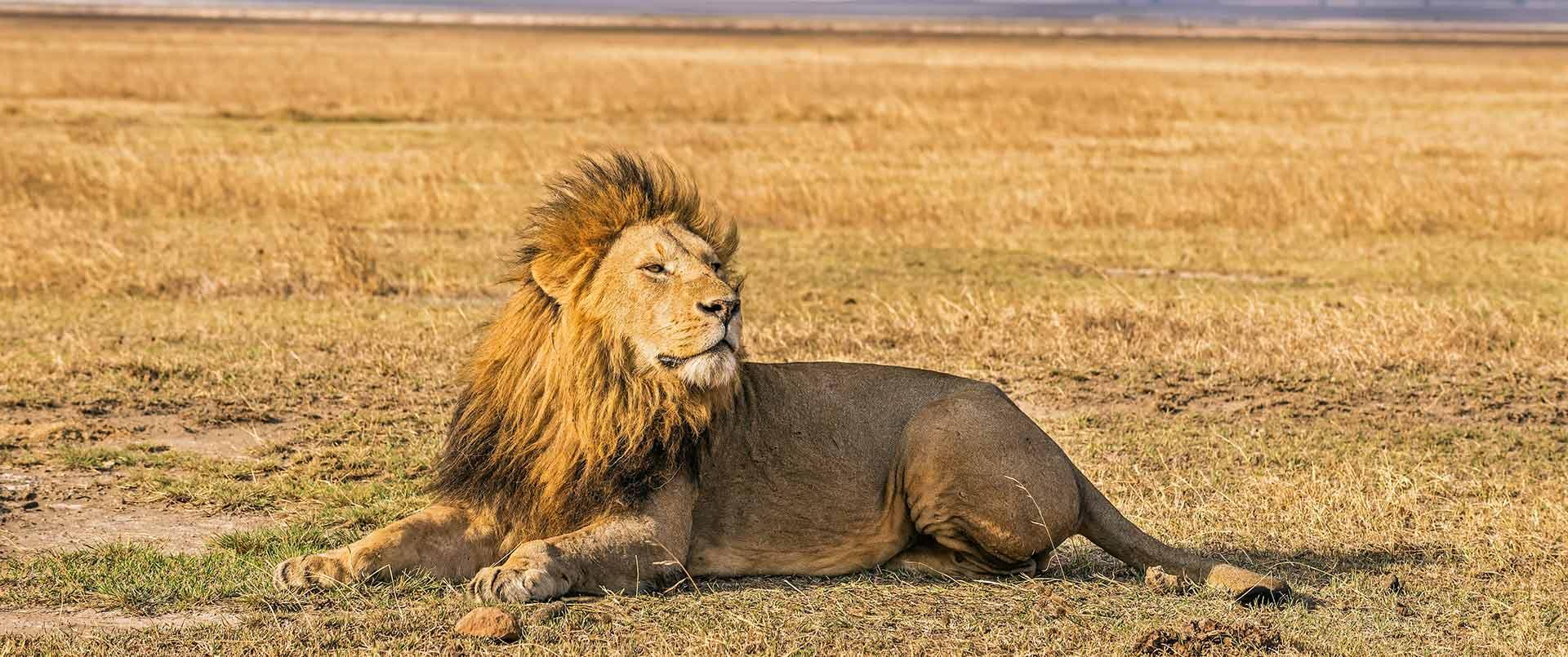 Safari in the Lion Kingdom