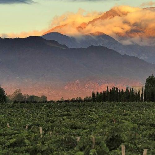 Club Tapiz, Chacras de Coria, Wine region