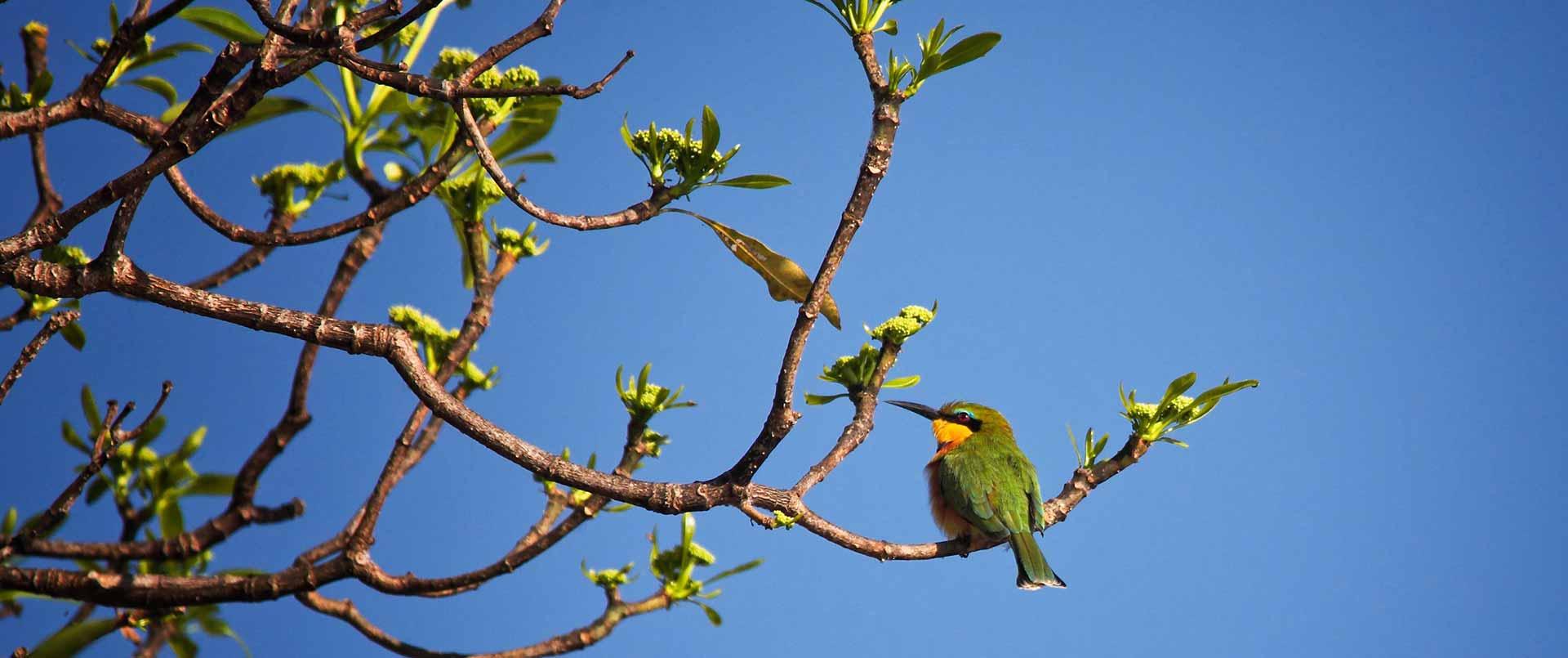 Malawi Fly-In Safari