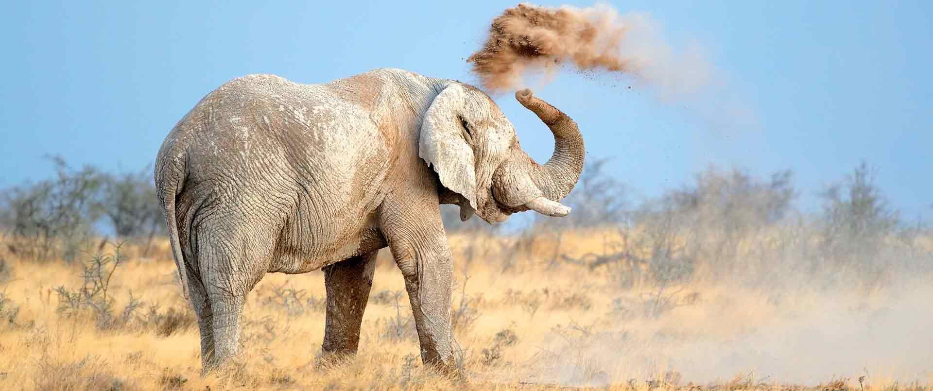 Ultimate Namibia