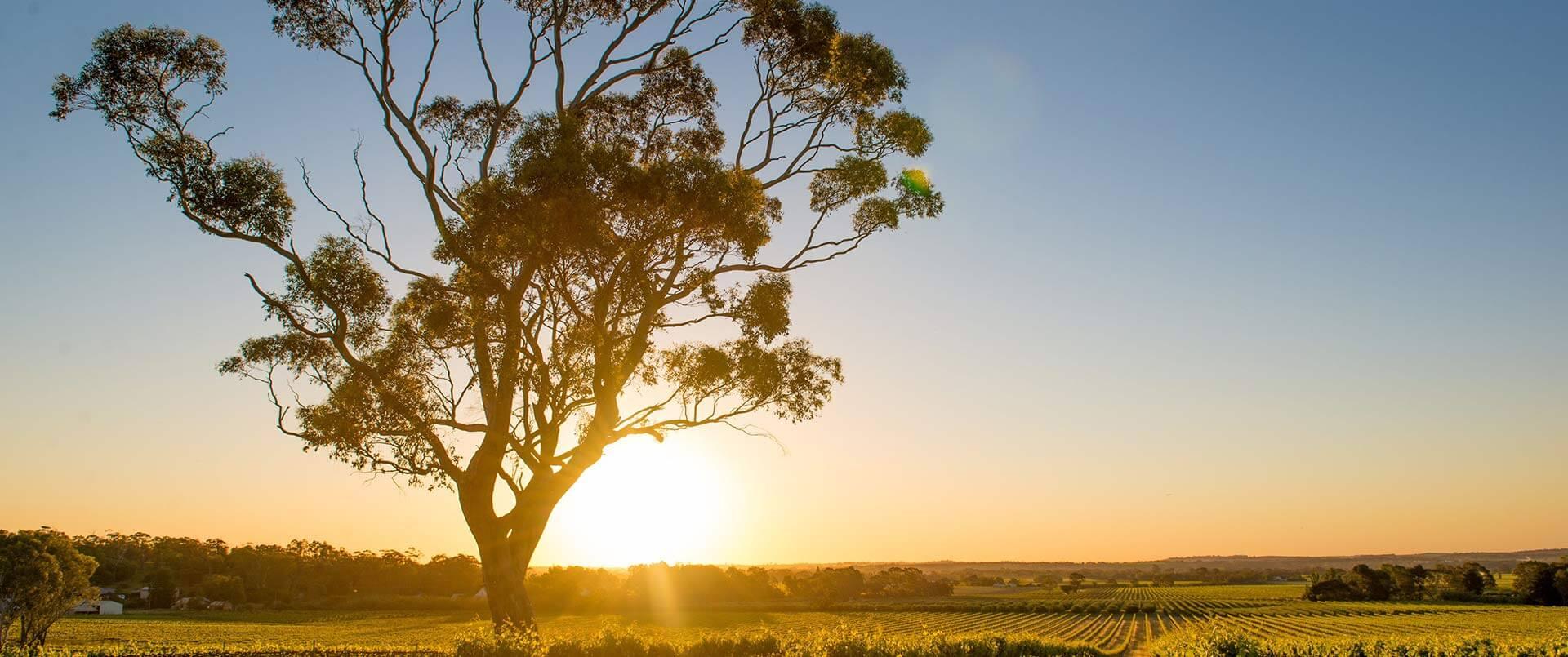 Australia Southern Comforts