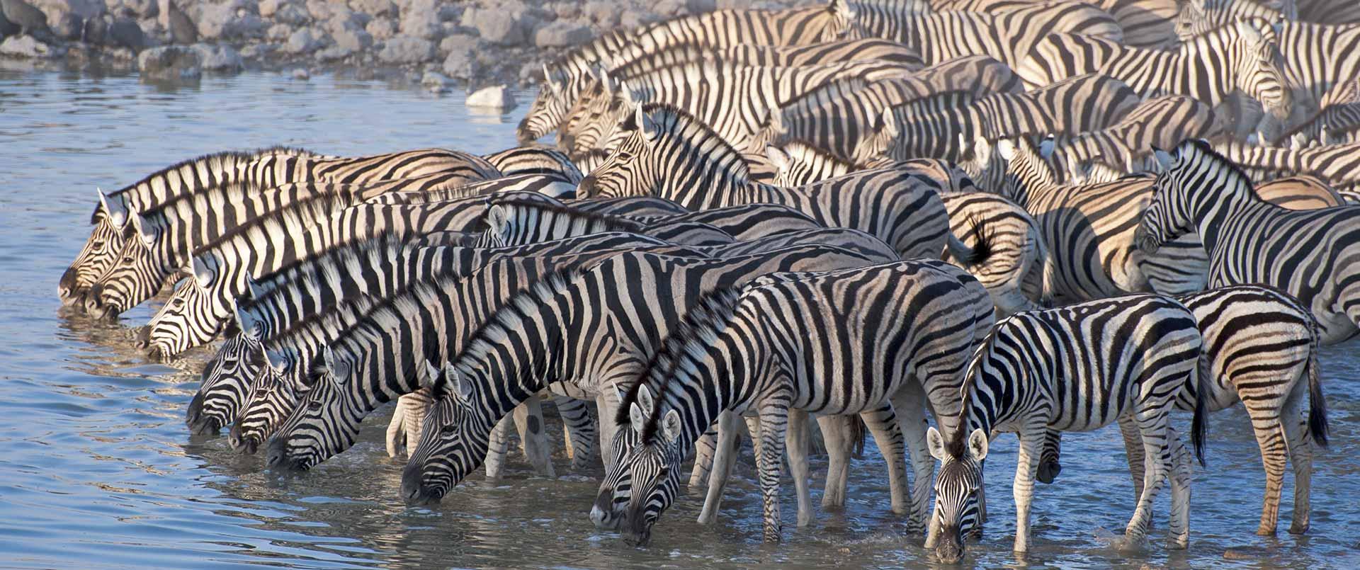 Schoeman Skeleton Coast Safari