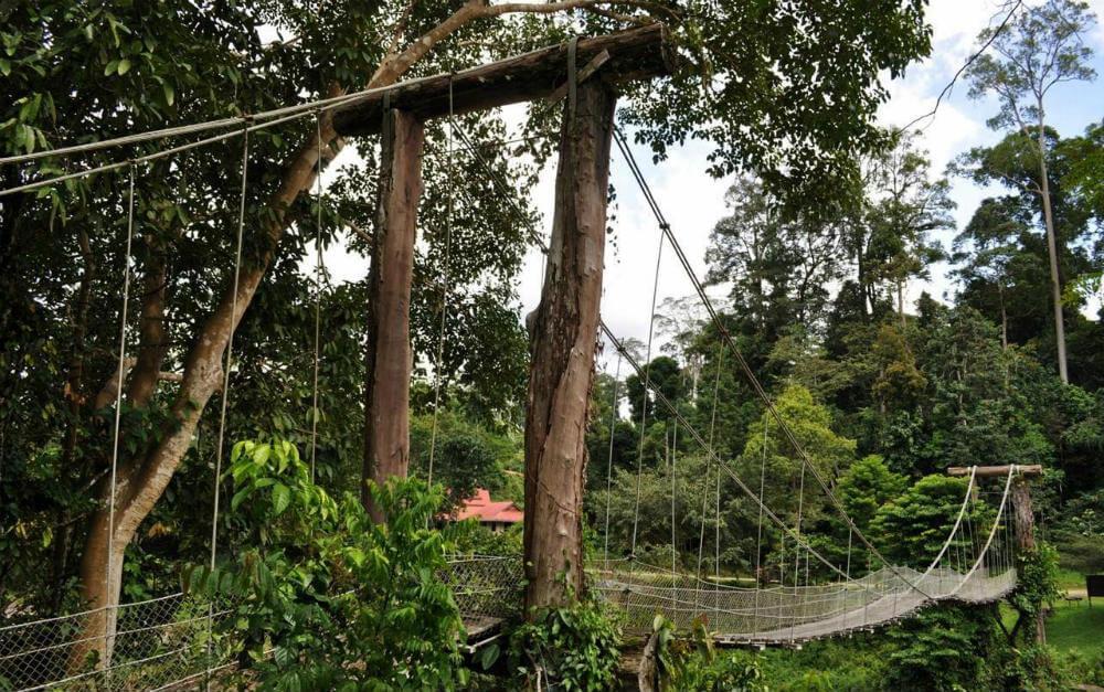 prev & Borneo Rainforest Lodge Danum Valley   Ultimate Travel Co