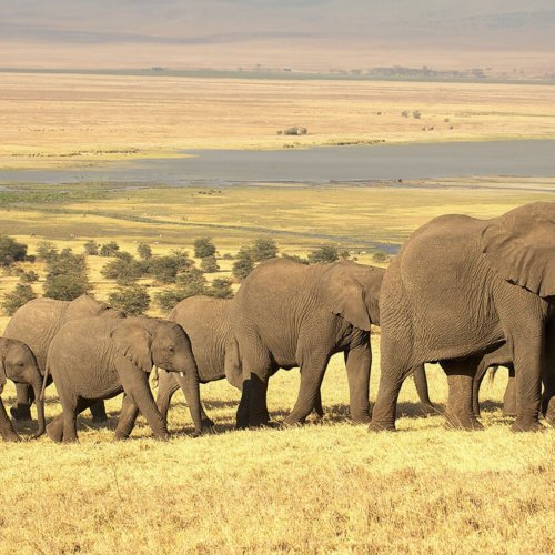 Tanzania: Elephants & Wild Island Retreats