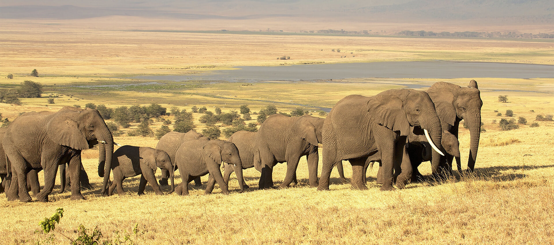Tanzania: Elephants & Wild Island Retreats