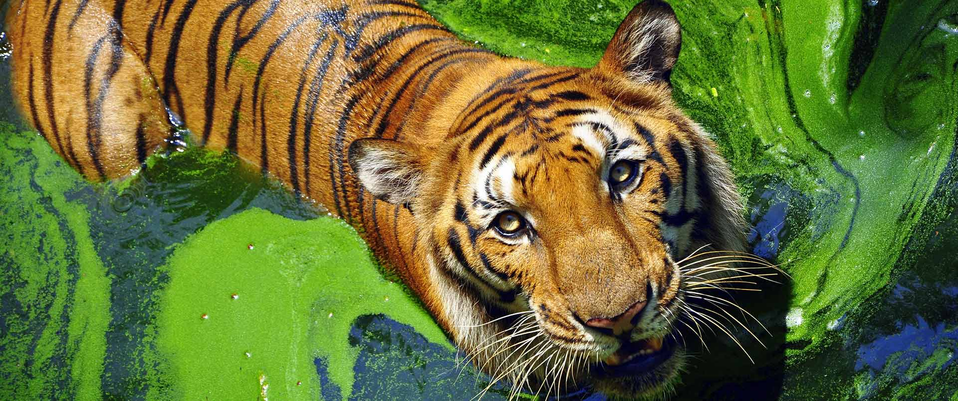 Indian Wildlife Safari