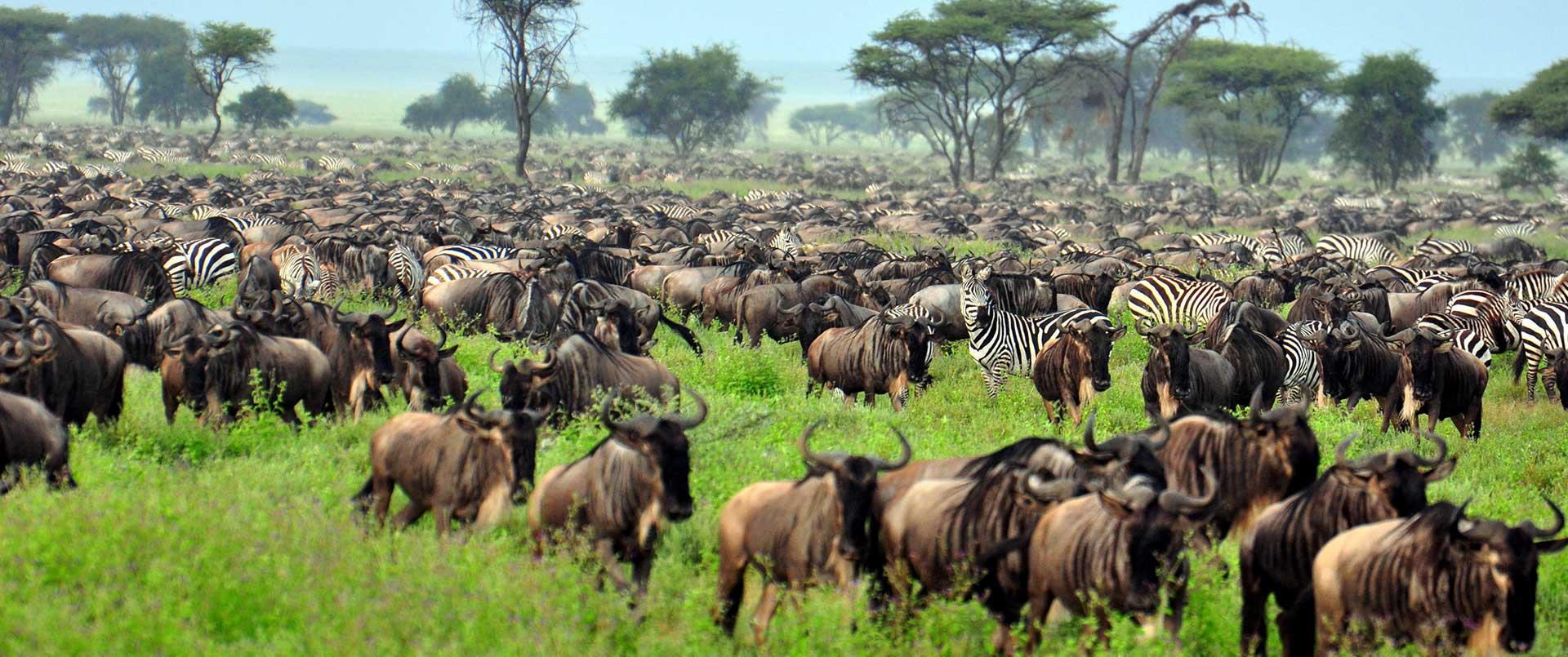 Honeymoon in Tanzania and Zanzibar