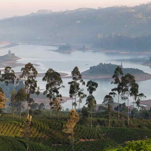 Ceylon Tea Trails, Castlereagh Reservoir