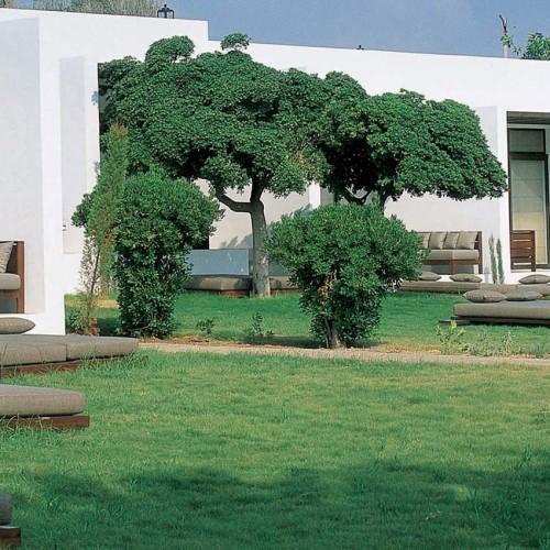 Almyra, Paphos