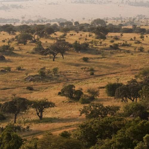 Mkombe's House, Serengeti