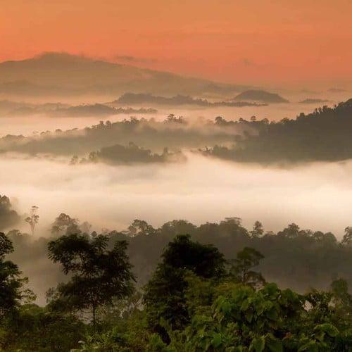 Sabah Wildlife of Borneo