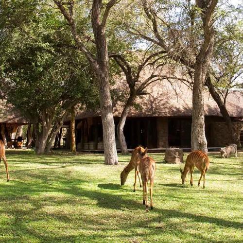 Dulini Private Game Reserve, Sabi Sands