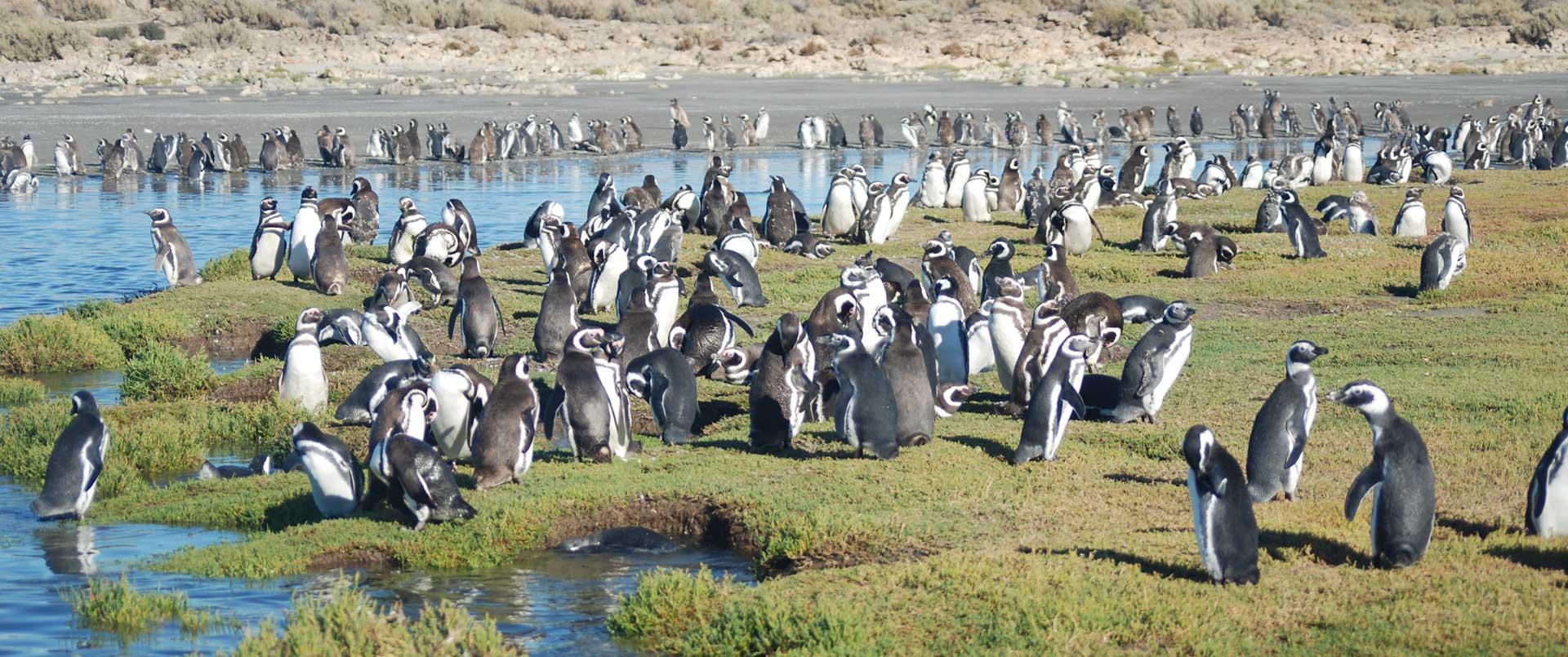 Bahia Bustamante, Patagonia