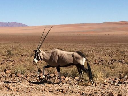 Lydia-Namibia-FAM---Oryx