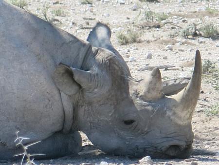 Lydia-Namibia-FAM---rhino