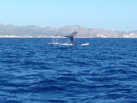 Paul Mexico FAM, 2015. Whale watching at Los Cabos