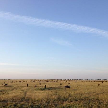 Augusta-Tanzania-Blog-herd-of-buffalo-on-the-serengeti