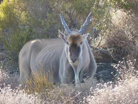Tania-South-Africa-blog,-Bushman's-Kloof,-Eland