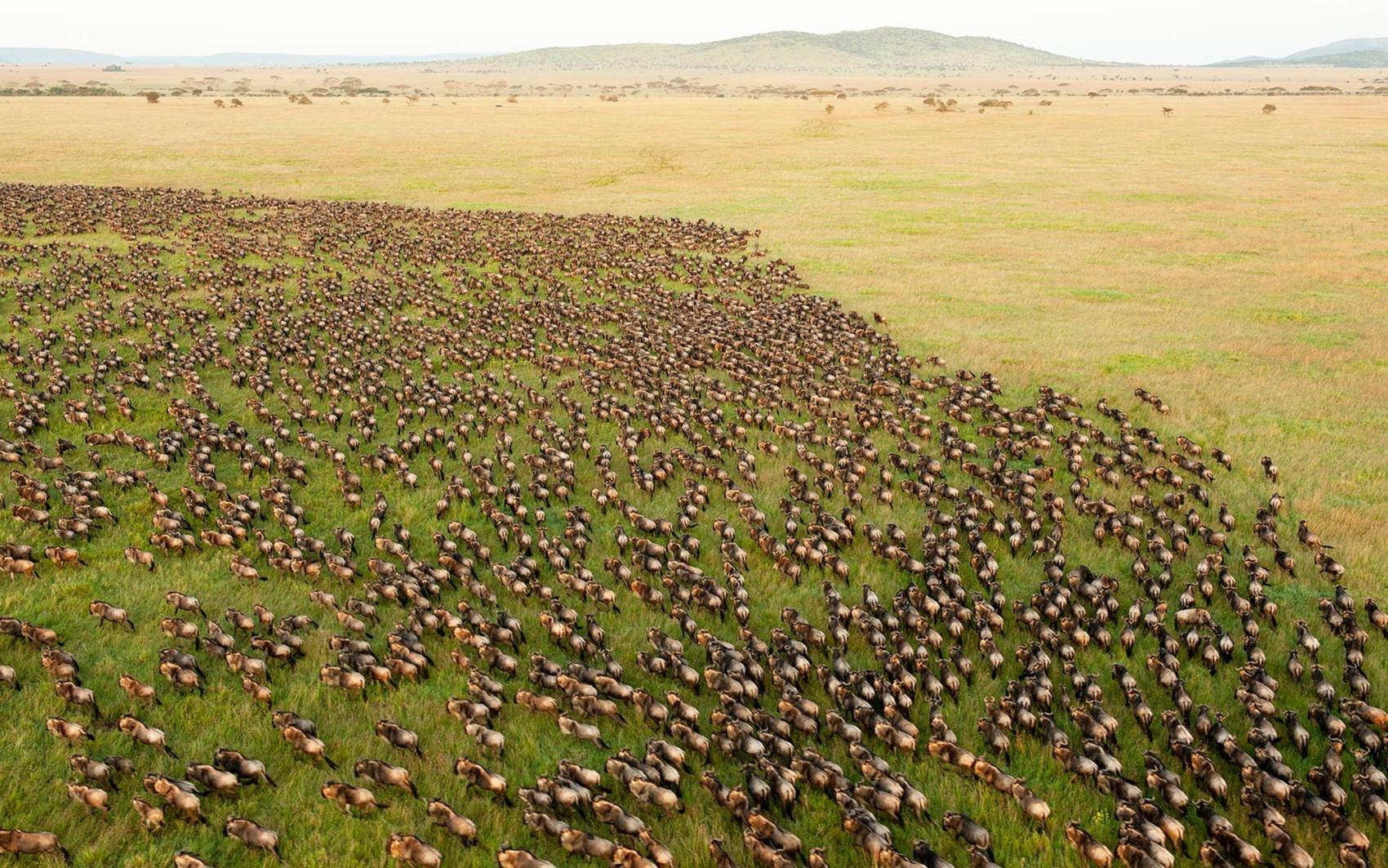 Simply Kenya