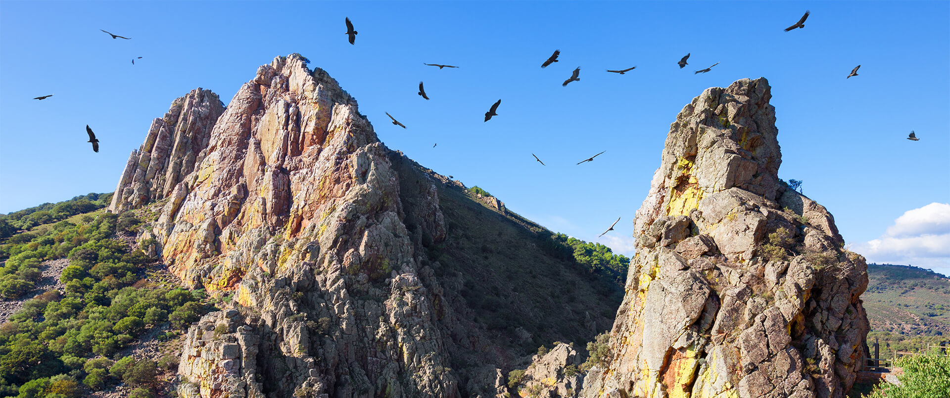 Extremadura with Wild Insights