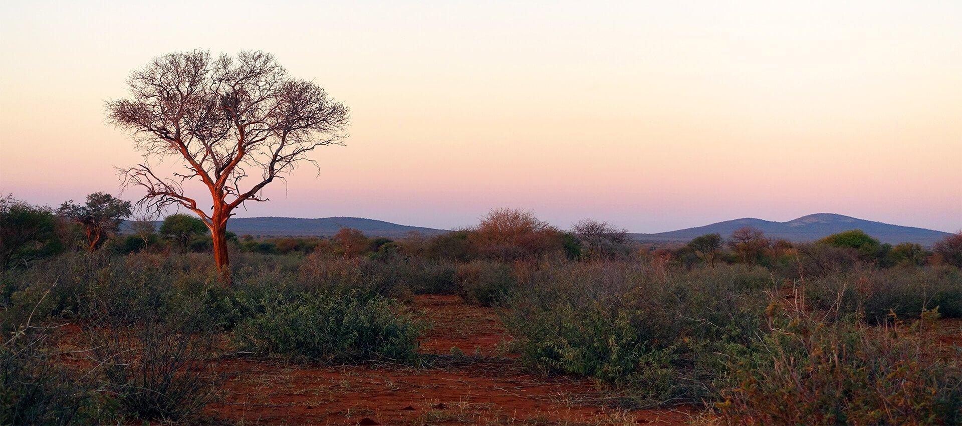 Magnificent Madikwe