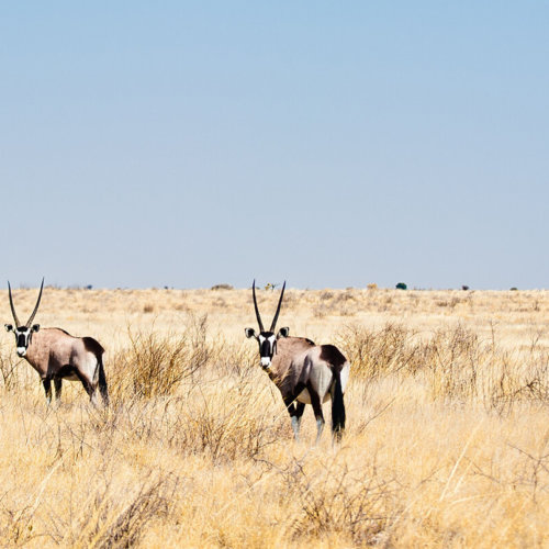 Delta and Kalahari Adventure