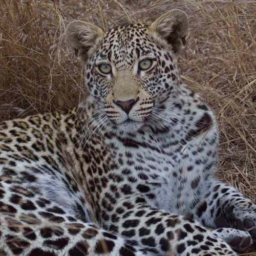 Kruger with Wild Insights: The Best of African