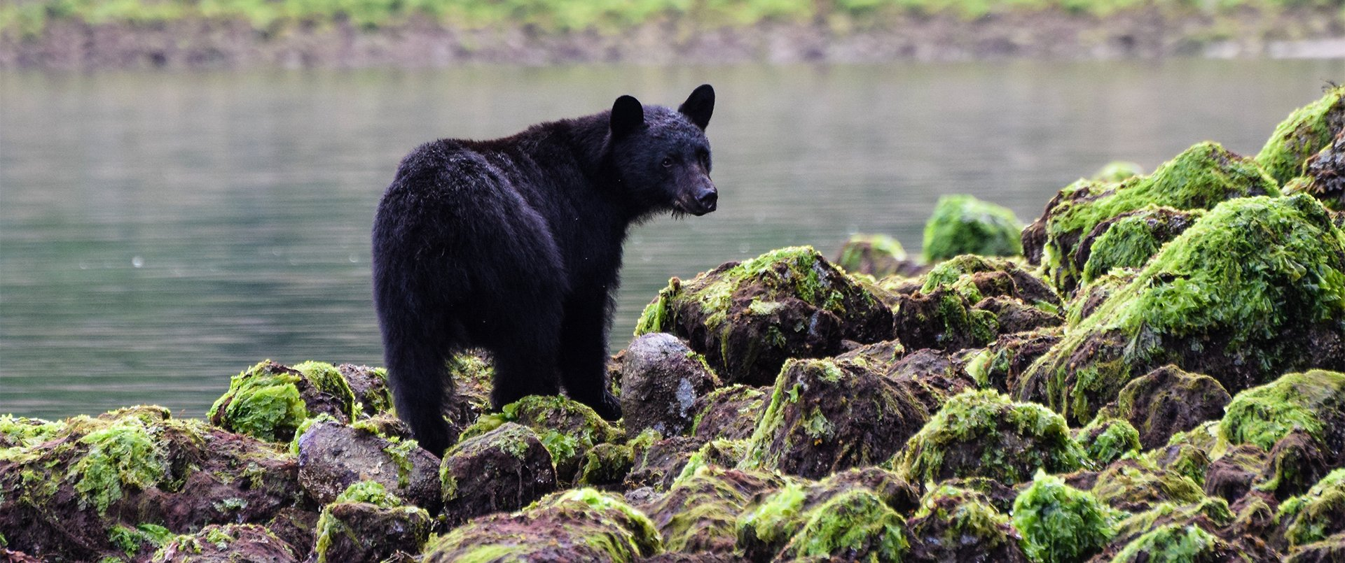 Western Wildlife – Whales & Bears in Canada
